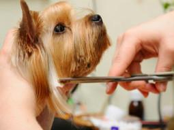 Gentle pet groomer in Southwick, MA by Dog Zone pet service | Dog Zone | Scoop.it