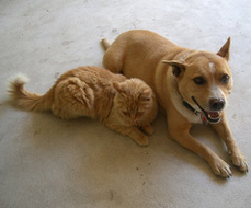 What Does a Government Shutdown Mean for Animals? - HSUS News   Animals R Us   Scoop.it