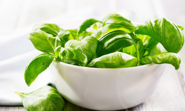 Basil: Subtle Kitchen Herb with Powerful Health Benefits - Care2.com | Indian herbals | Scoop.it