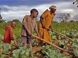 """Agriculture familiale ou """"familiarcale"""" ? Des raisons pour la soutenir   Chimie verte et agroécologie   Scoop.it"""