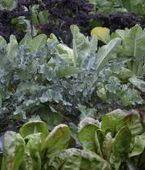 Latin plant names help with planning gardens | Keeler Gardens:  Scoops | Scoop.it