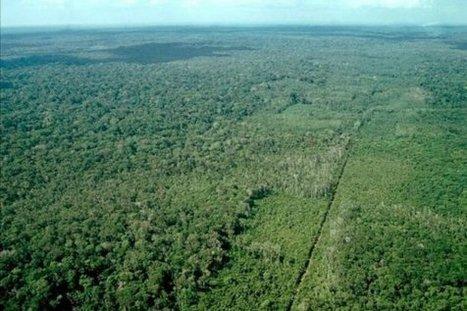 Desde 1990, el mundo ha perdido una extensión de bosques similar al tamaño de Sudáfrica | ECOSALUD | Scoop.it
