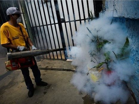 Zika Exposes Environmentalists' Deliberate DDT Death Toll - Breitbart | Insect Information and Keys | Scoop.it