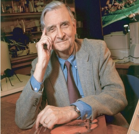 ECOBUDDHISM :: Edward O. Wilson | E-Learning and Online Teaching | Scoop.it