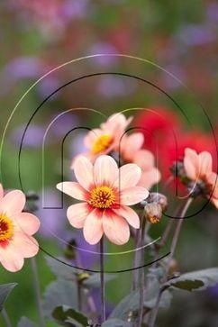 Spring Flowering Bulbs Makes the Most Gorgeous Modern Garden!! | Flower Bulbs | Scoop.it