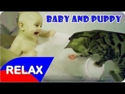 Top Funny Videos Compilation 2016 - Funny Baby And Puppy | Education | Scoop.it