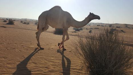 Best Morning Desert Safari Tour Packages | My Favorite | Scoop.it