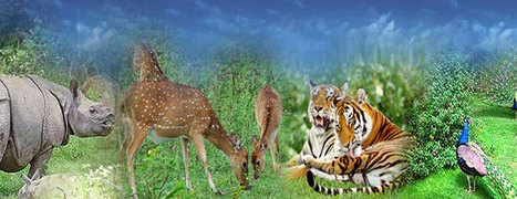 Explore Wildlife in Kerala | Kerala Backwater India | Scoop.it