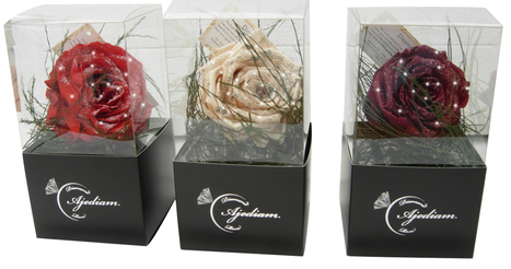 Introducing Intense Feelings Diamonds on Roses by Ajediam | CelebritizeYou | Scoop.it