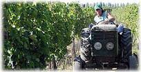 Argentine: les producteurs s'unissent | Autour du vin | Scoop.it
