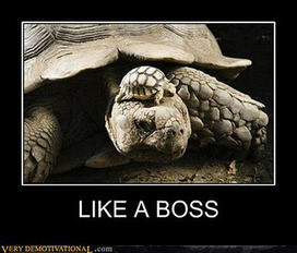 Comme un boss (démotivation) ~ Buzz Skyzzor | Demotivational posters | Scoop.it