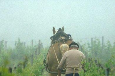 Le retour du cheval - Sud Ouest | Bordeaux | Scoop.it