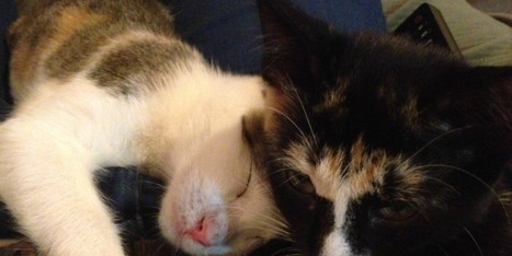 How to Become a Cat Lady in 5 Simple Steps - Huffington Post | Bella and Momo | Scoop.it
