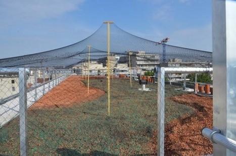 Biodiversité : végétalisation ou énergies renouvelables sur les toits ... - Moniteur | Biodiversité ordinaire et fonctionnelle en agriculture | Scoop.it