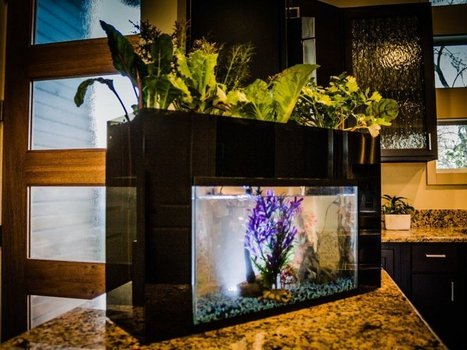 A College Student Has Figured Out How To Grow Food Using Your Old Fish Tank | Aquaponics World View | Scoop.it
