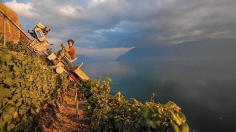 Swiss bank on vineyards of Lavaux to make fine #wine   Vitabella Wine Daily Gossip   Scoop.it