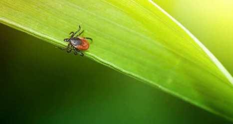 Bientôt un plan d'action national contre la maladie de Lyme | SOCIAL ET SANTE | Scoop.it