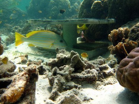 Coral Reef Cam Shows Where Large Fish Hang Out | Water Stewardship | Scoop.it