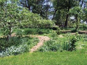 Plant an Edible Forest Garden | forest gardening | Scoop.it