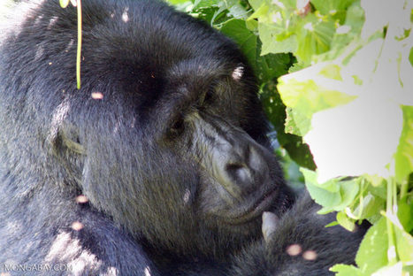 Calls for CITES to address the corruption fueling the illegal wildlife trade | Endangered Species News | Scoop.it