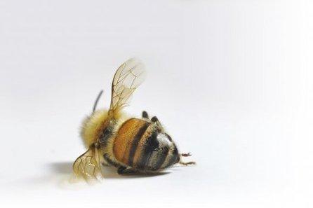 Pourquoi cette hécatombe chez les insectes ? | Toxique, soyons vigilant ! | Scoop.it