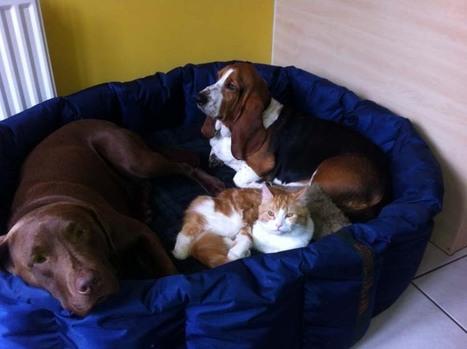 Dog Beds, Waterproof Dog Beds, Large Dogs Beds, Luxury Dog Beds UK | The Dog Blogger | Scoop.it