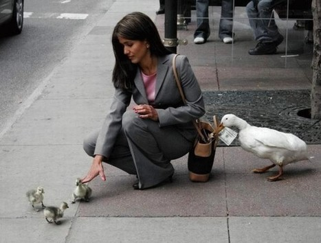 24 People That Got Hustled by Animals | Funny Stuff | Scoop.it