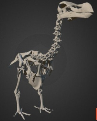 First-Ever 3D Atlas of Extinct Dodo Created | Amazing Science | Scoop.it