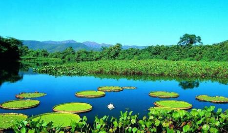 Pantanal | Biologia Primeiro Ano do Ensino Medio | Scoop.it