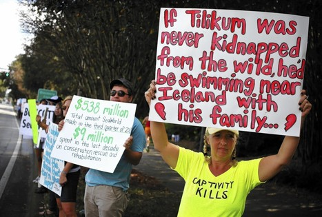 Protesters demand end to killer-whale shows at SeaWorld - Orlando Sentinel | Animals R Us | Scoop.it