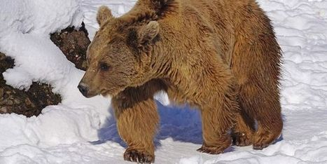 Aider les personnes âgées grâce aux ours… | responsabilité humaine | Scoop.it
