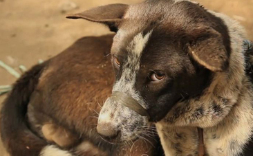 Video Exposes Shocking Dog Meat Industry In Bali   Nature Animals humankind   Scoop.it