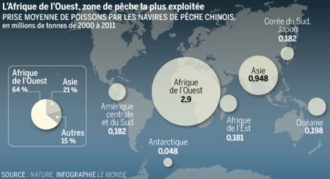 Rays' world - Le monde des raies: Comment la pêche chinoise pille les océans de la planète | Rays' world - Le monde des raies | Scoop.it