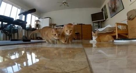 レーザーポインターを追いかける猫を前から見たらこうなるらしい - ねこ ...   レーザーポインター   Scoop.it