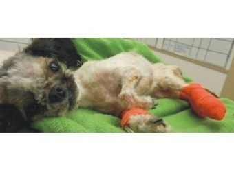 Outrage: Dog so badly abused that it dies, owner walks « STOP ... | Rhino poaching | Scoop.it