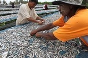 Thai Fishing Industry's Dirty Secret: Human Slavery - MFA Blog | Nature Animals humankind | Scoop.it