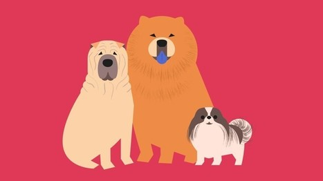 The Surprising Origins of How Dogs Came to Be | Biology Education Resources | Scoop.it