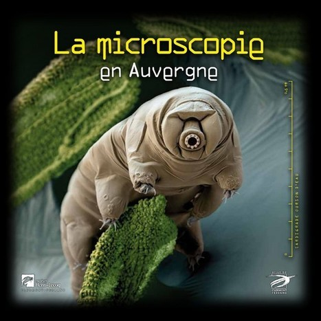 La microscopie en Auvergne | EntomoScience | Scoop.it