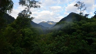 An unprecedented threat to Peru's cloud forests | News Center | Wake Forest University | Making the World a Better Place | Scoop.it