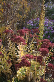 8 Perennials for Great Fall Color | Gardening Life | Scoop.it
