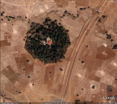 """Saving Ethiopia's """"Church Forests"""" 