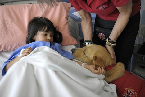 Perros devuelven la sonrisa a niños enfermos del hospital de Heredia | I didn't know it was impossible.. and I did it :-) - No sabia que era imposible.. y lo hice :-) | Scoop.it