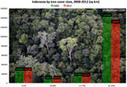 Deforestation accelerates in Indonesia, finds Google forest map | Wildlife and Environmental Conservation | Scoop.it