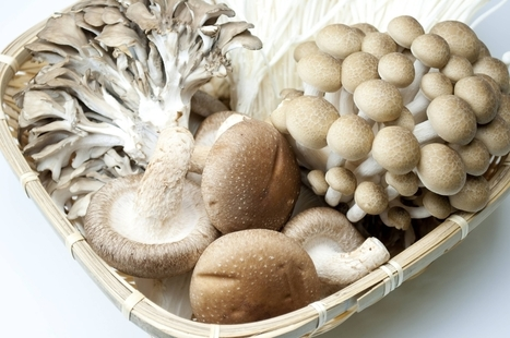 Best immunity boosters: Include various types of mushrooms in the diet | Nutrition Today | Scoop.it