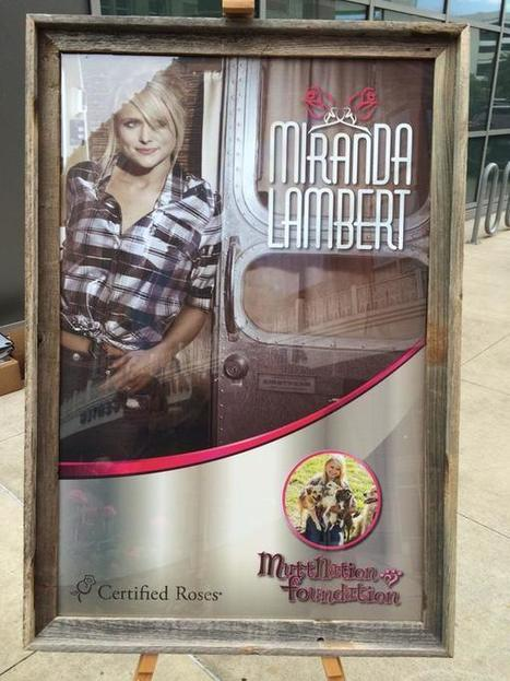 Miranda Lambert Rose Announced - Certified Roses Scores An Awesome Introduction With A Purpose | Cottage Gardening | Scoop.it