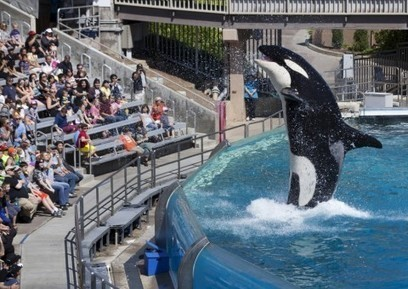 Three animals have died in three months at SeaWorld San Antonio | Nature Animals humankind | Scoop.it