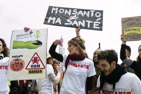 Manifestations en France et dans le monde contre Monsanto | EntomoNews | Scoop.it