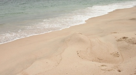 Gabon: Les plages des tortues disparaissent | CRAKKS | Scoop.it