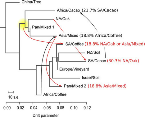 Independent Origins of Yeast Associated with Coffee and Cacao Fermentation: Current Biology | Stories of plants and its enermies | Scoop.it
