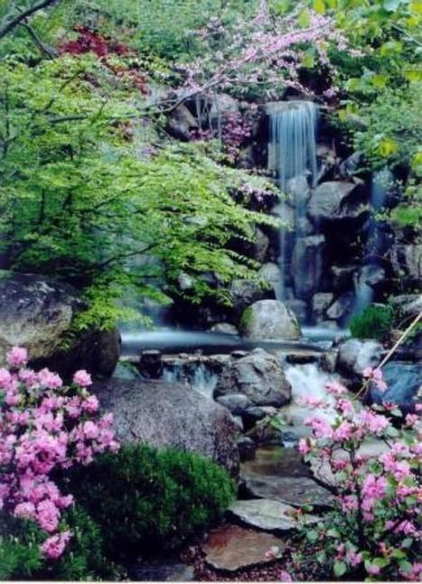 Anderson Japanese Gardens Ranked Highest Quality Japanese Garden in ... - WIFR | My Japanese Garden | Scoop.it